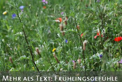 Fr�hlingswiese