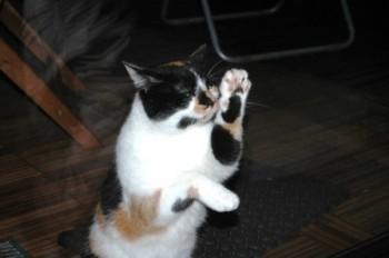 Katze vor Terassentuer